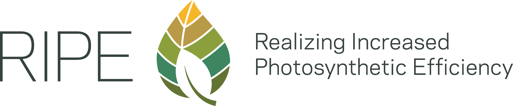 Logo Realizing Increased Photosynthetic Efficiency