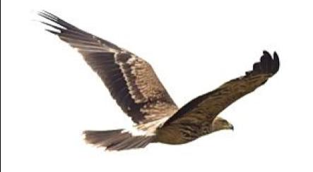 Logo Eagleridge Innovations Corporation