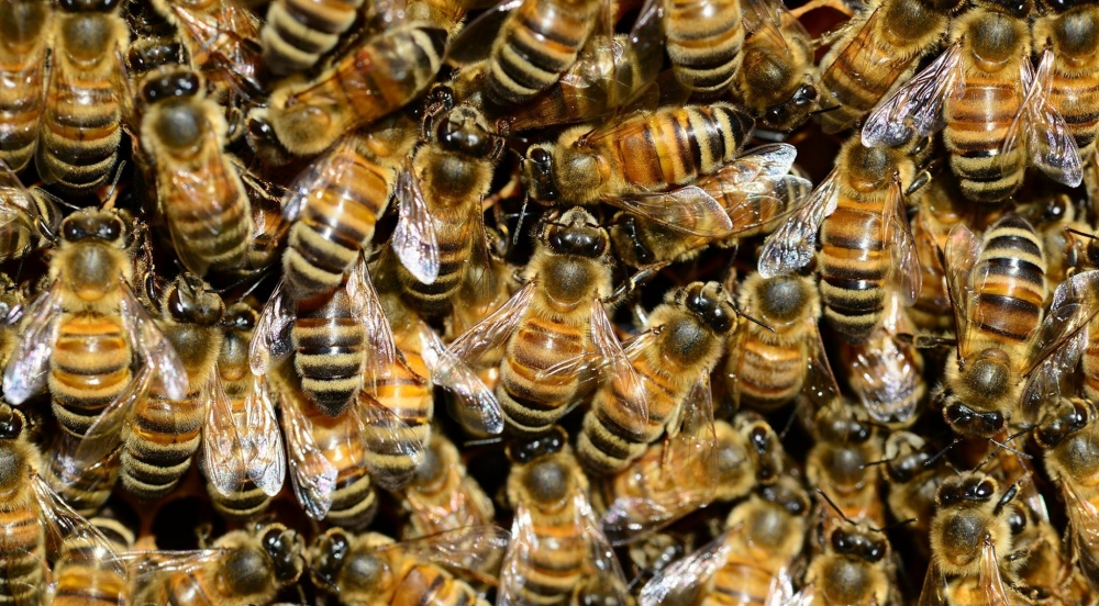 Offer Honey Bees: Chemical-free Varroa Treatment