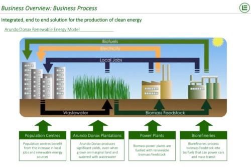 Gallery Bioenergy from Arundo Donax Biomass 1