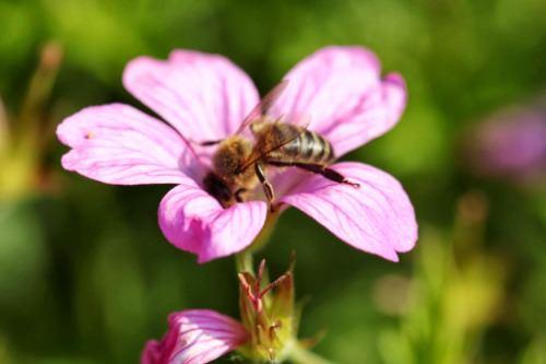 Gallery BeeOmonitoring 1