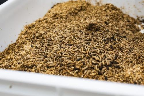 Gallery Entomo Insect Biofactories 1