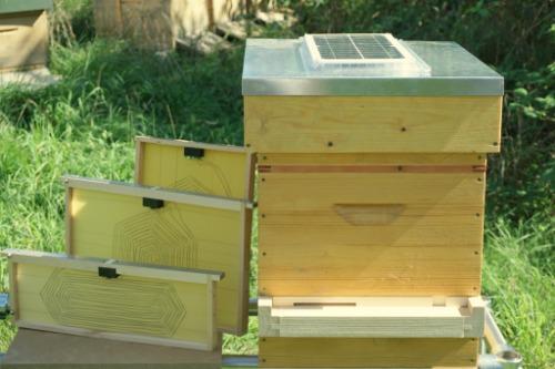 Gallery Honey Bees 1