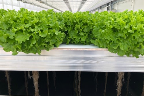 Gallery Mobile Aeroponics Farming 1