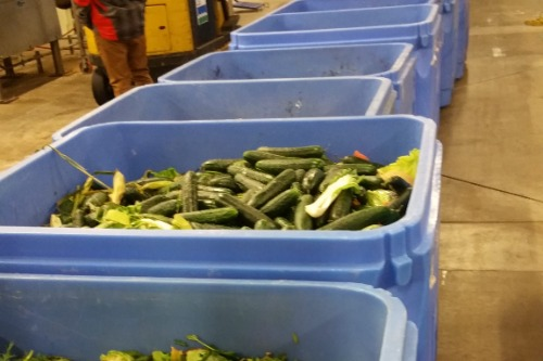Gallery Harvest to Harvest food recovery solution 1