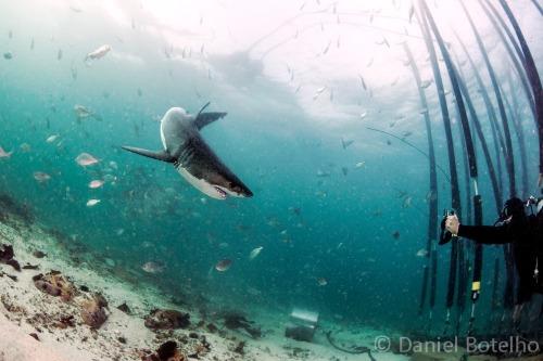 Gallery SharkSafe Barrier™ 1