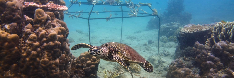 Gallery Blue Economy to restore and preserve coastal ecosystems 1