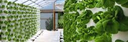 Gallery Productive & Ecological Urban Farm 1