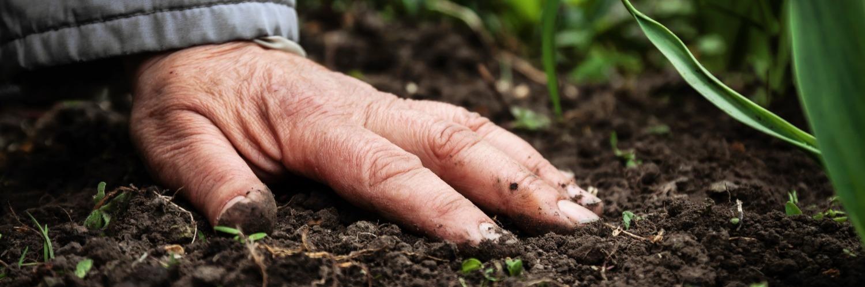 Gallery Microbial Soil Fertilisation 1