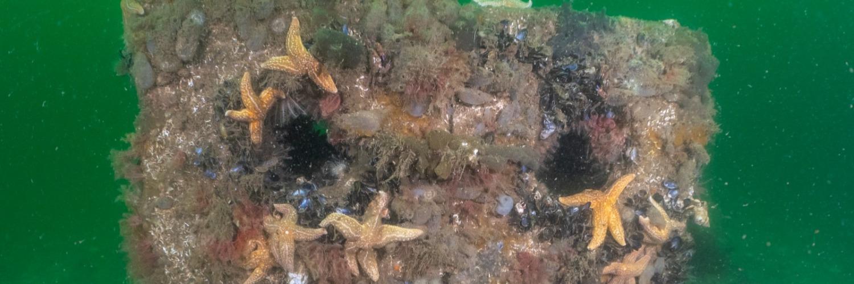 Gallery Reef Cubes® & Marinecrete  1