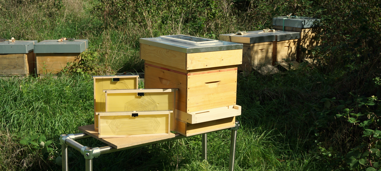Gallery Honey Bees 2
