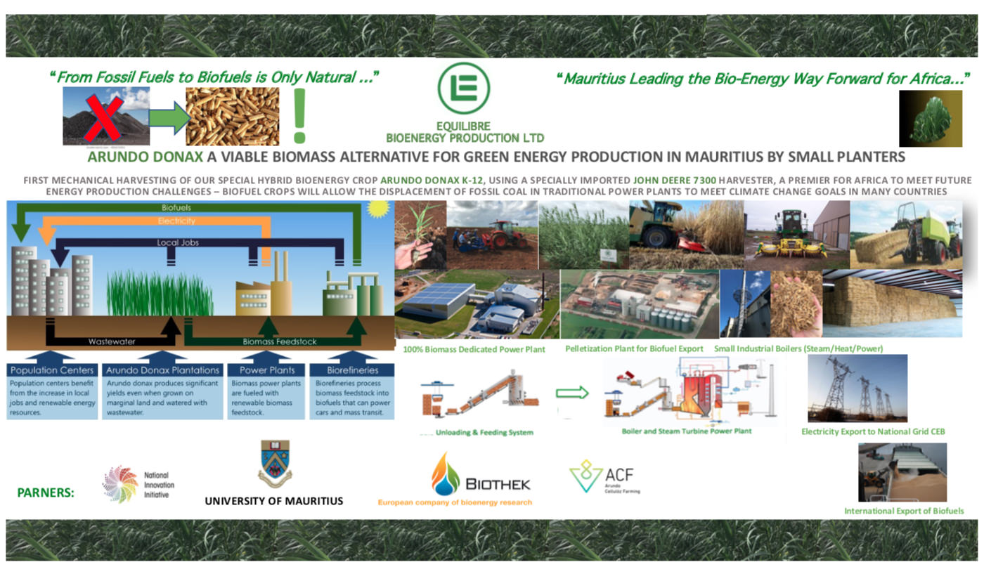 Gallery BIOENERGY, ELECTRICITY & FUEL PELLETS PRODUCTION FROM ARUNDO DONAX BIOMASS 3