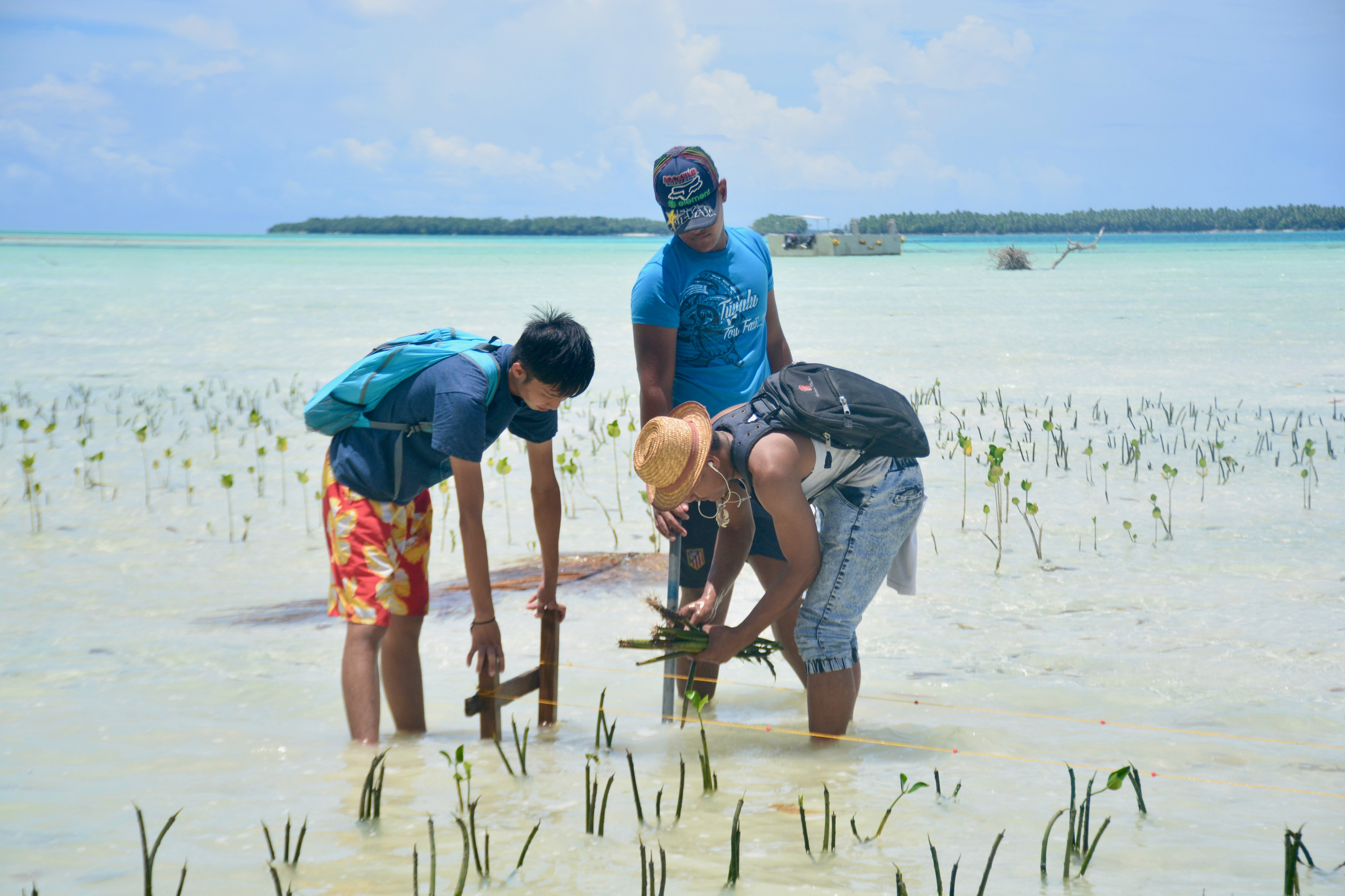 Gallery Blue Economy to restore and preserve coastal ecosystems 3