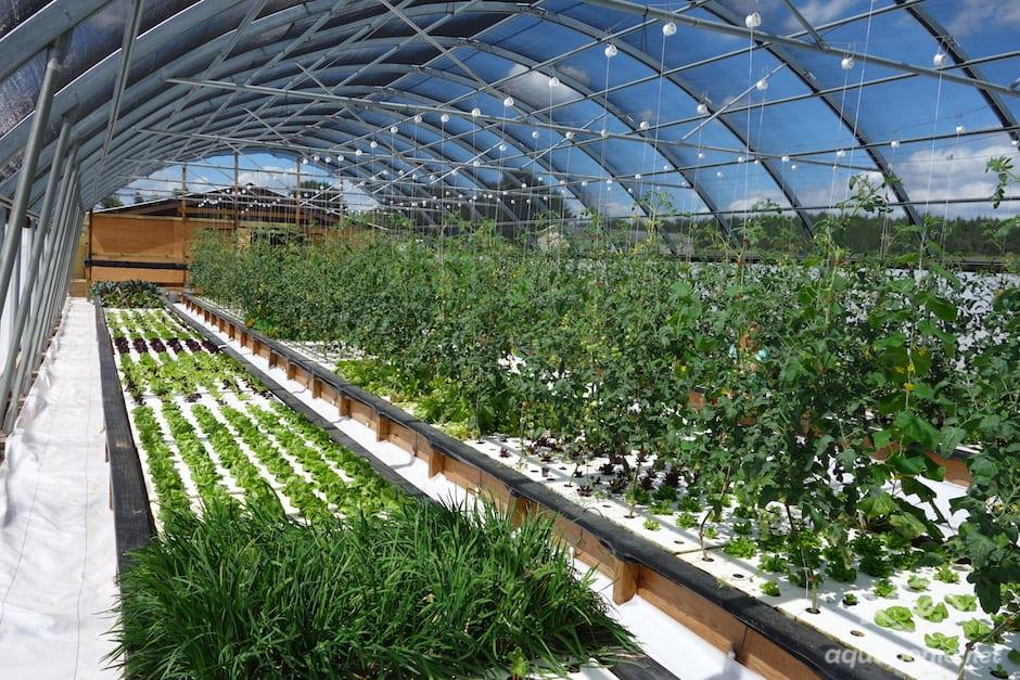 Gallery Productive & Ecological Urban Farm 3