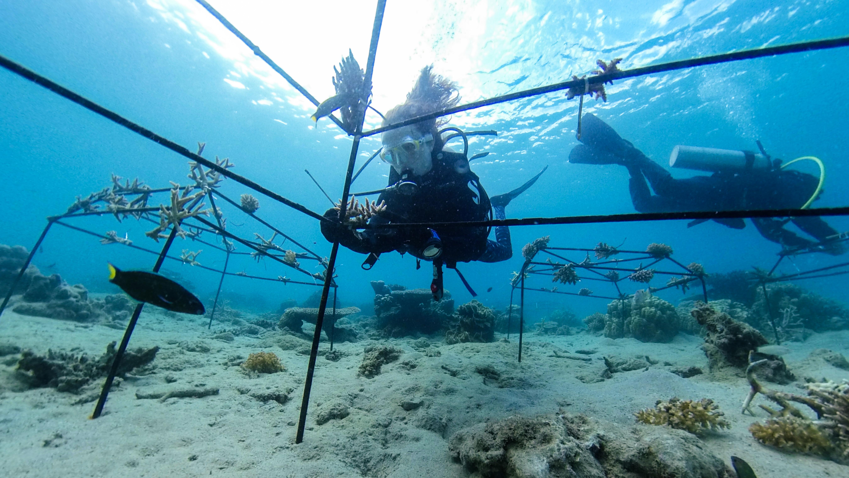 Gallery Blue Economy to restore and preserve coastal ecosystems 4