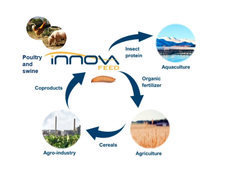 Gallery InnovaFeed Insect Based Protein 4