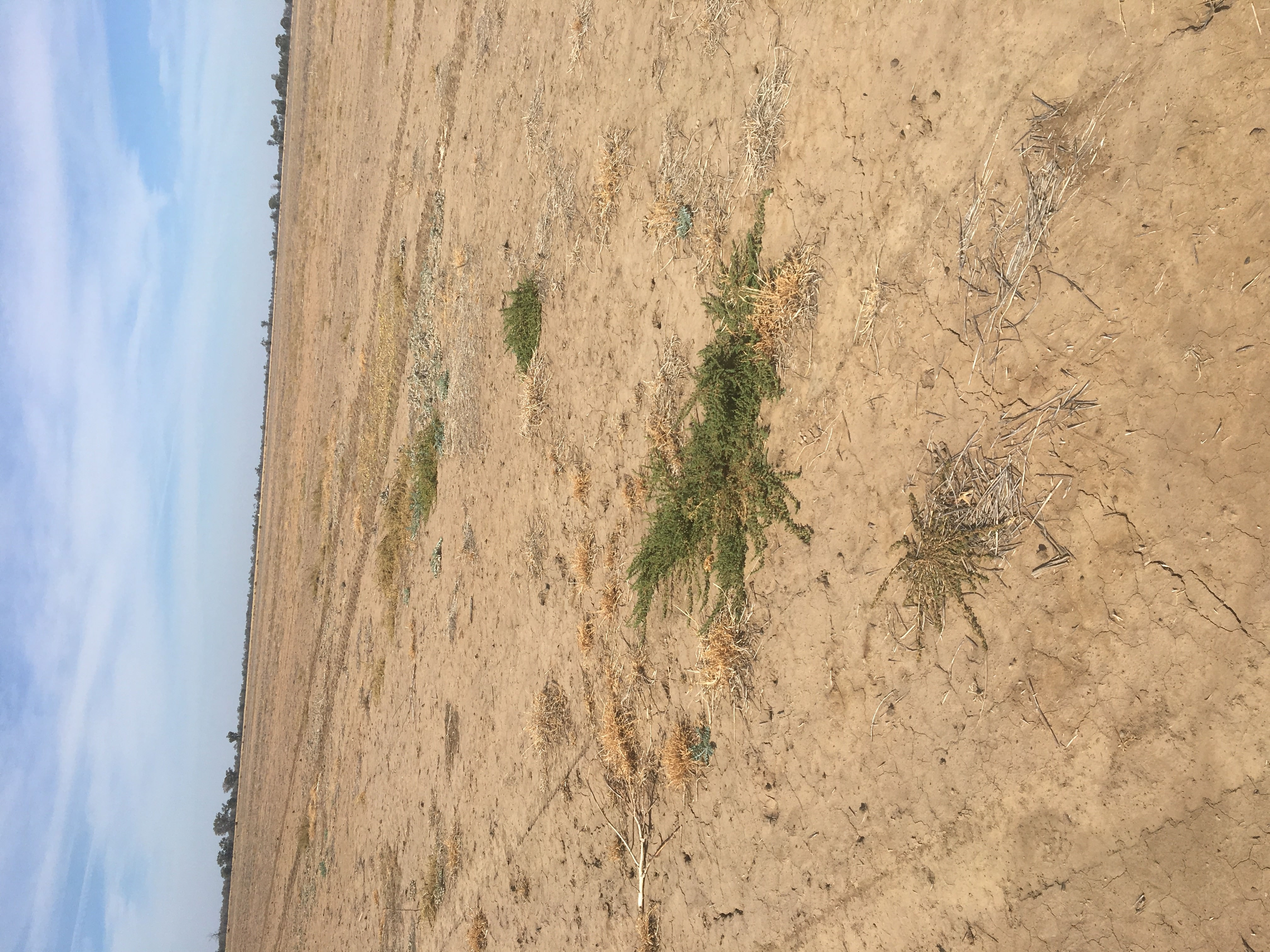 Gallery Fallow weed detection 4