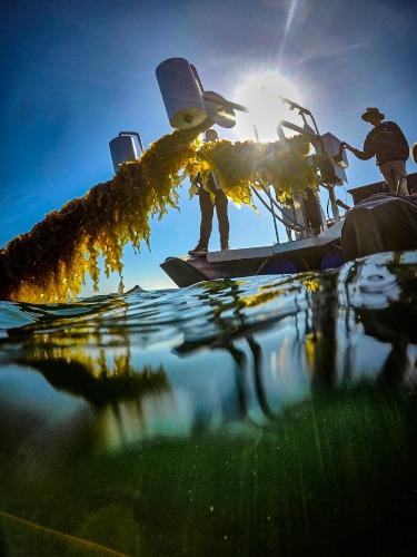 Gallery Seaweed Farmer 1.0  4