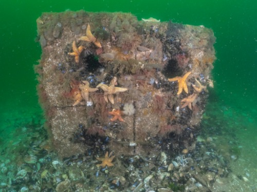 Gallery Reef Cubes® & Marinecrete  4