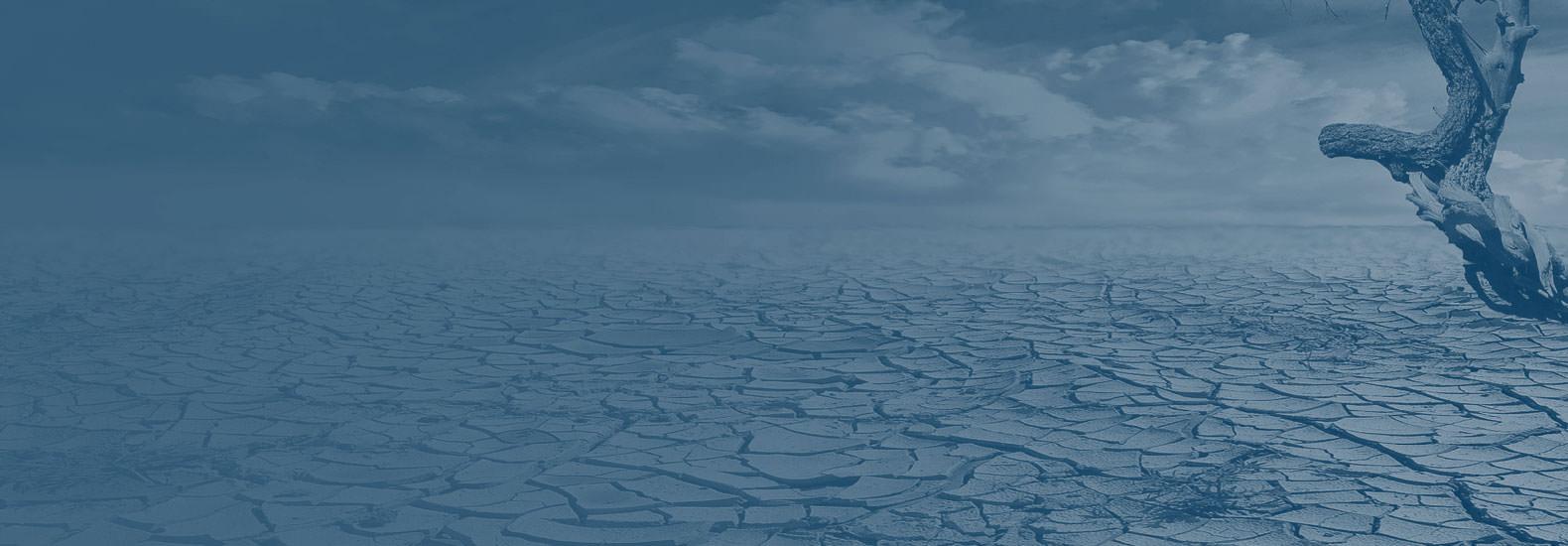 polar bear on ice cap