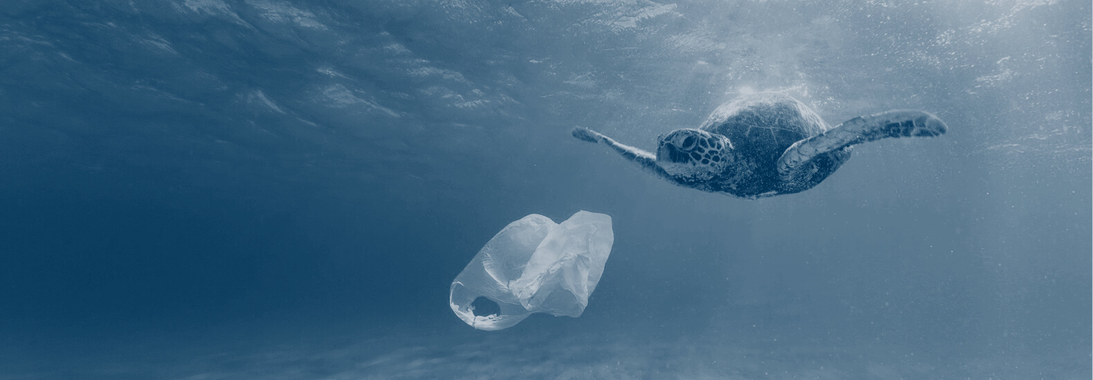 Turtle swimming by a plastic bag